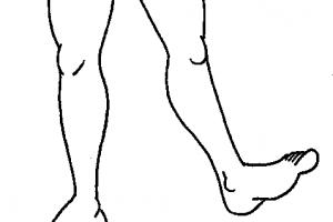 leg clipart 1