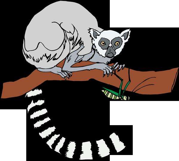 Lemur Clip Art-Lemur Clip Art-7