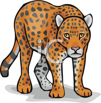 Leopard Clipart-Clipartlook.com-343