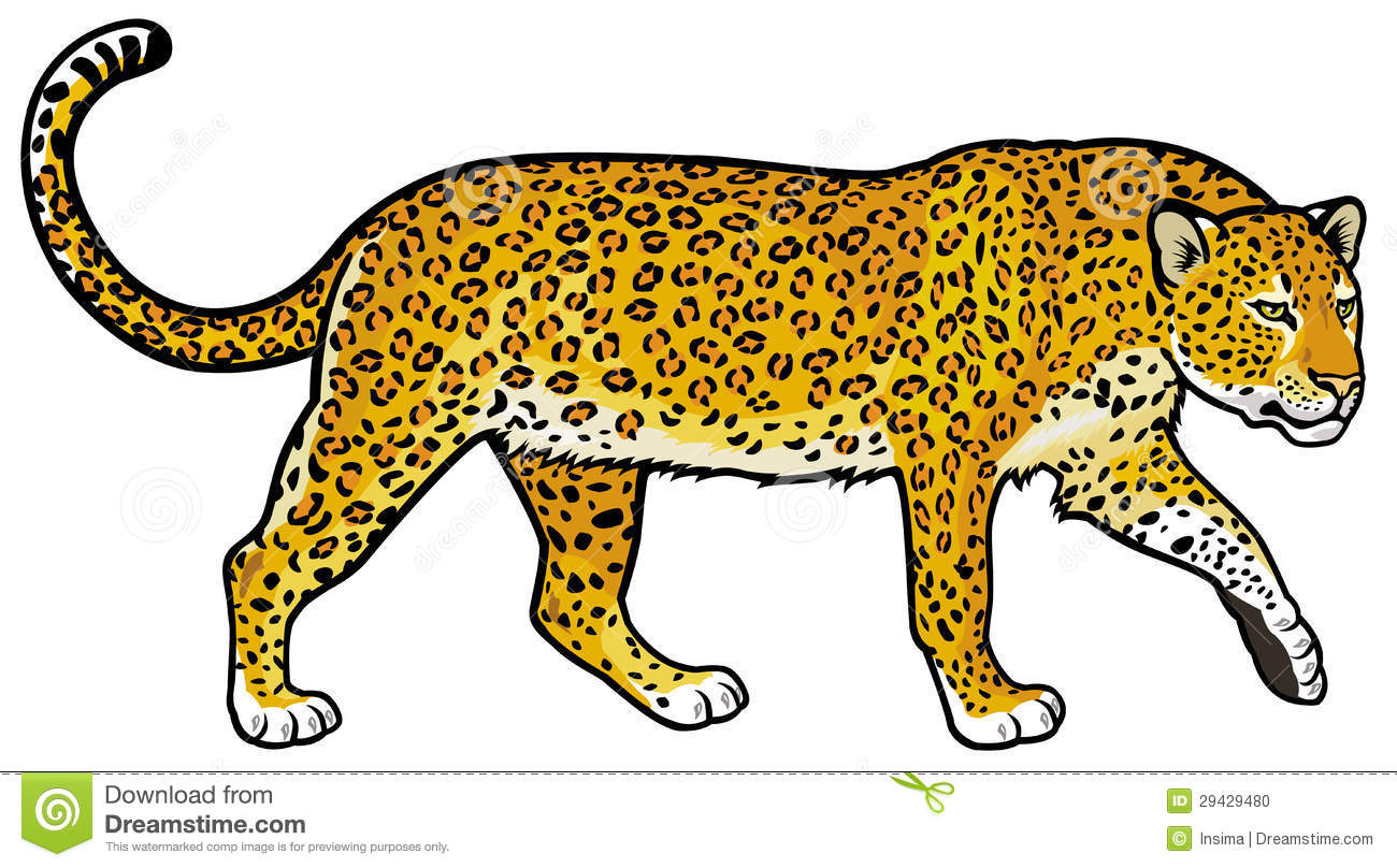 Leopard Clipart-leopard clipart-11