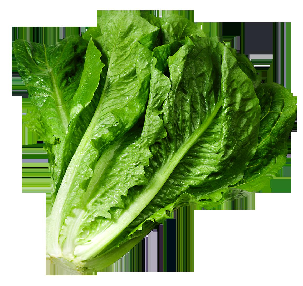 Lettuce Clip Art Clipartall-Lettuce clip art clipartall-10