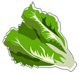 Lettuce Food Facts Belly Bytes .-Lettuce food facts belly bytes .-14