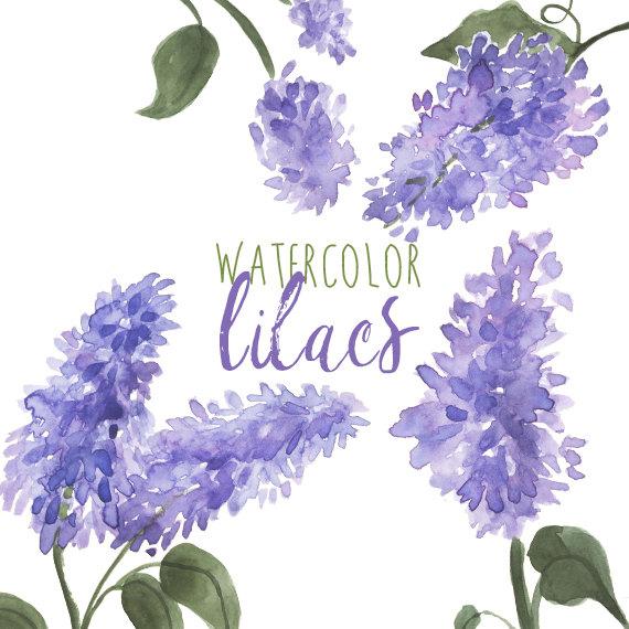 Lilac Clipart-Clipartlook.com-570
