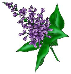 Lilac Clipart. 1000  image .