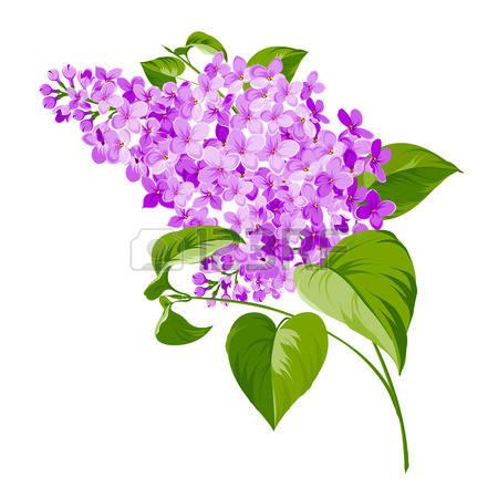 Spring siringa flowers background for the romantic design. Vector  illustration