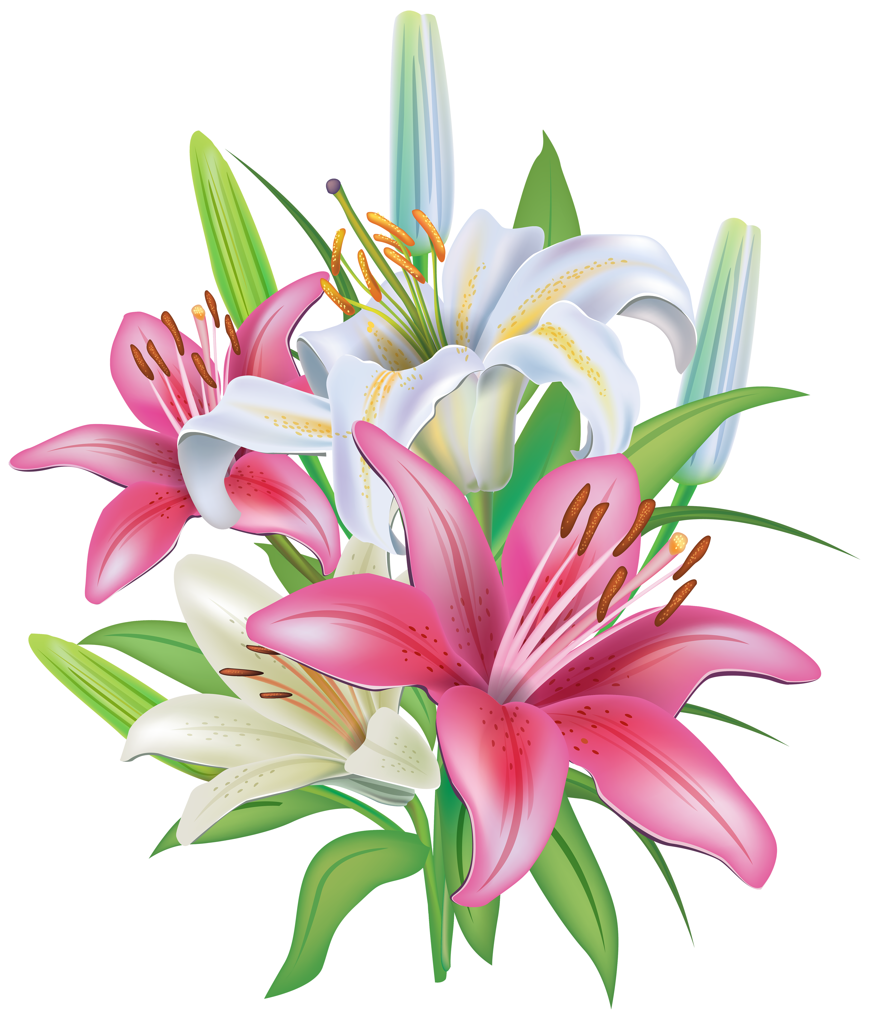 Pink lilies clipart #6