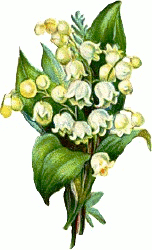 Free Lily Clipart - Lily Of The Valley Clipart