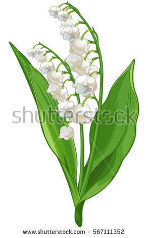 Illustration of Convallaria l - Lily Of The Valley Clipart