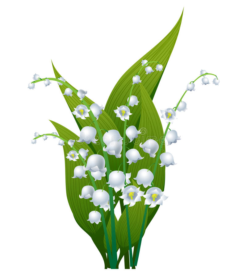 Lily of the valley - Lily Of The Valley Clipart