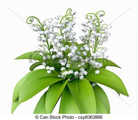 Lily of the Valley - csp83638 - Lily Of The Valley Clipart
