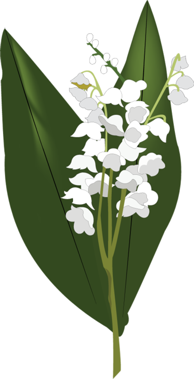 Lily of The Valley PNG HD - Lily Of The Valley Clipart
