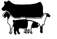 Livestock Show Clipart Livestock