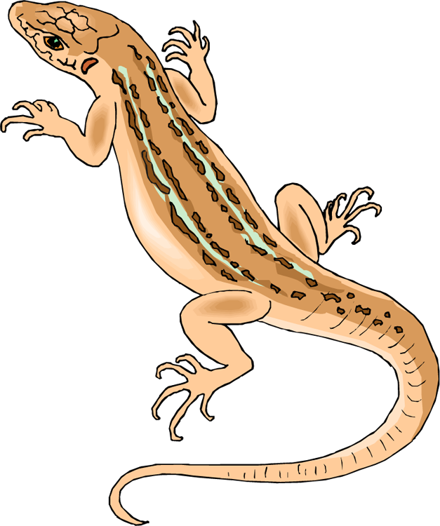 Lizard Clip Art Clipart Free Clipart u00-Lizard Clip Art Clipart Free Clipart u0026middot; «-18