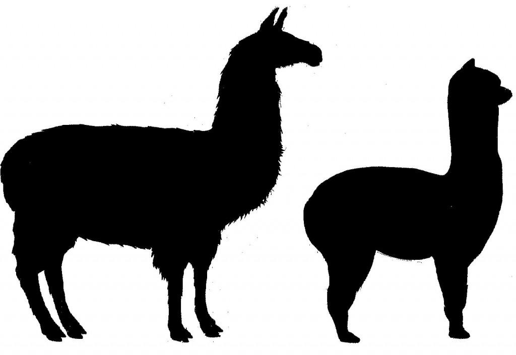 Llama Clipart 4-Llama clipart 4-12