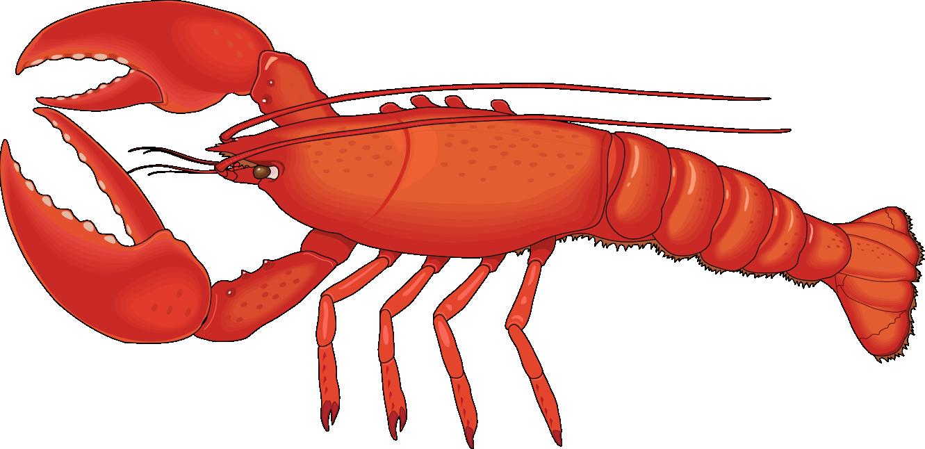Lobster Clip Art-Lobster Clip Art-10