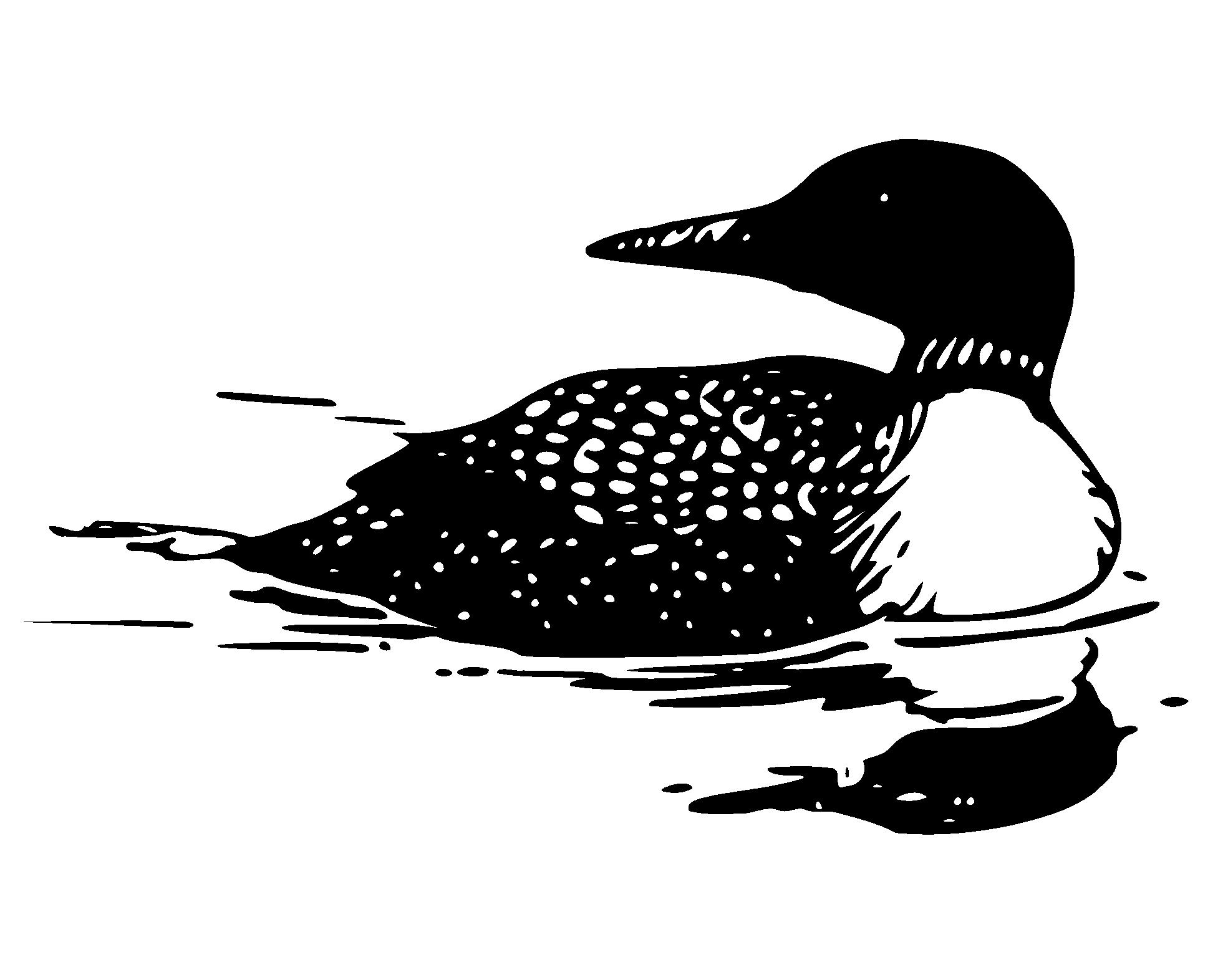 Loon Clipart-loon clipart-8
