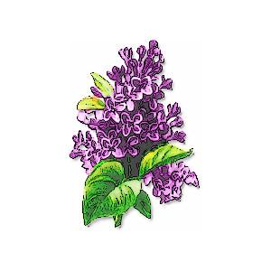 Lotus Lilac Clip Art. Abstract .