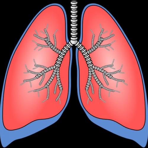 Lungs cartoon clipart - ClipartFest-Lungs cartoon clipart - ClipartFest-15