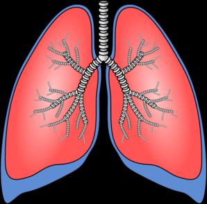 Lungs Clip Art-Lungs Clip Art-1