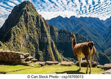 Llama Machu Picchu ruins peruvian Andes Cuzco Peru - csp16765013