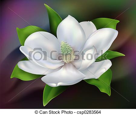 Magnolia - Digital Illustration From Low-Magnolia - Digital illustration from low resolution scan.-7