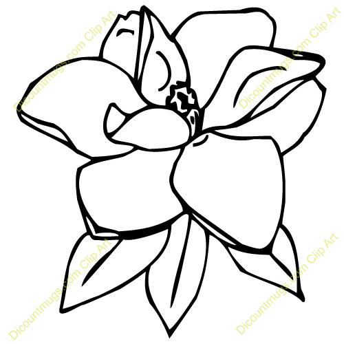 Magnolia Flower Clip Art-Magnolia Flower Clip Art-9