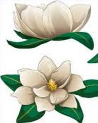 Magnolia - Magnolia Clipart