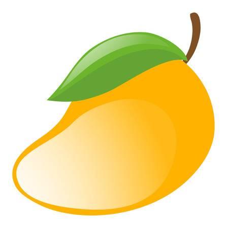 Fresh mango on white background illustration