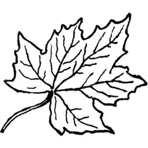 maple leaves clip art-maple leaves clip art-13