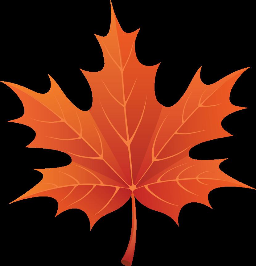 Maple leaf clip art clipartion com 2