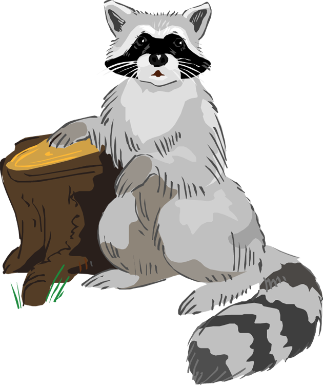 Masked Raccoon
