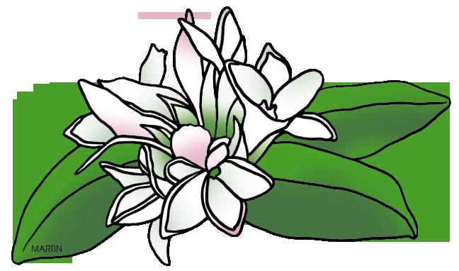 Massachusetts State Flower -  - Mayflower Clip Art