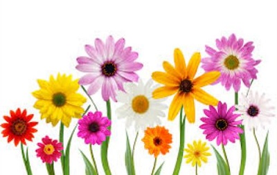 May Flowers-May flowers-12