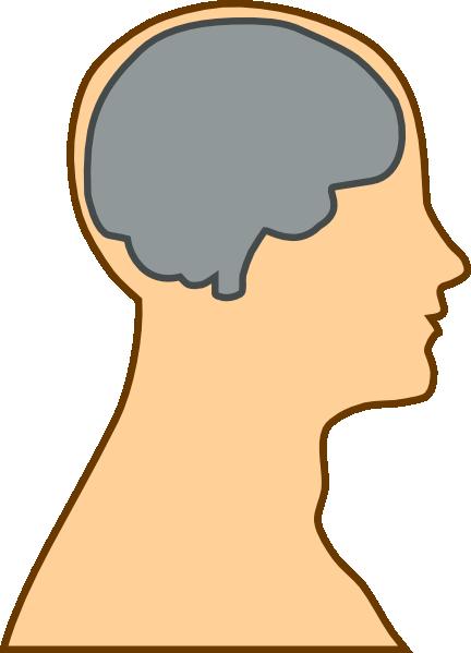 Medical Diagram Of Brain Clip Art At Clk-Medical Diagram Of Brain Clip Art At Clker Com Vector Clip Art-8