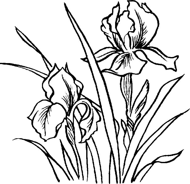 Microscope Clipart Black And White-microscope clipart black and white-8