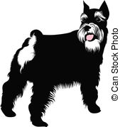 ... Miniature Schnauzer Dog-... miniature schnauzer dog-3
