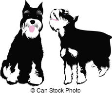 ... Miniature Schnauzer Dog-... miniature schnauzer dog-4