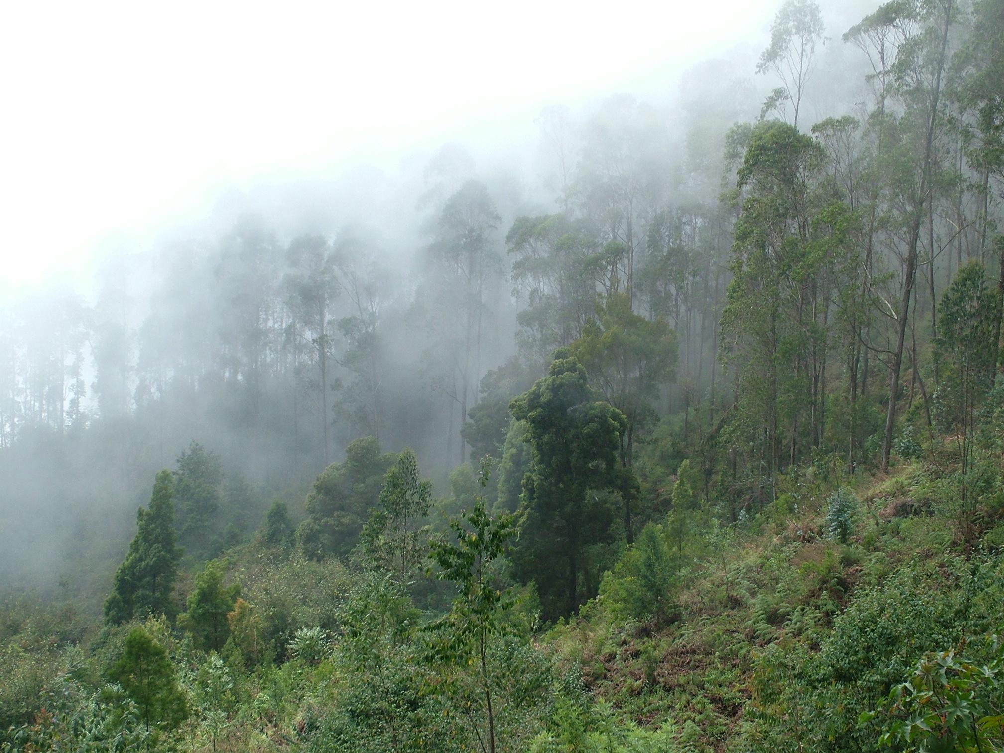 Download sunny-fog image in hi-res!