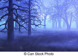 Misty Morning Forest - A mist settles over a forest on an.