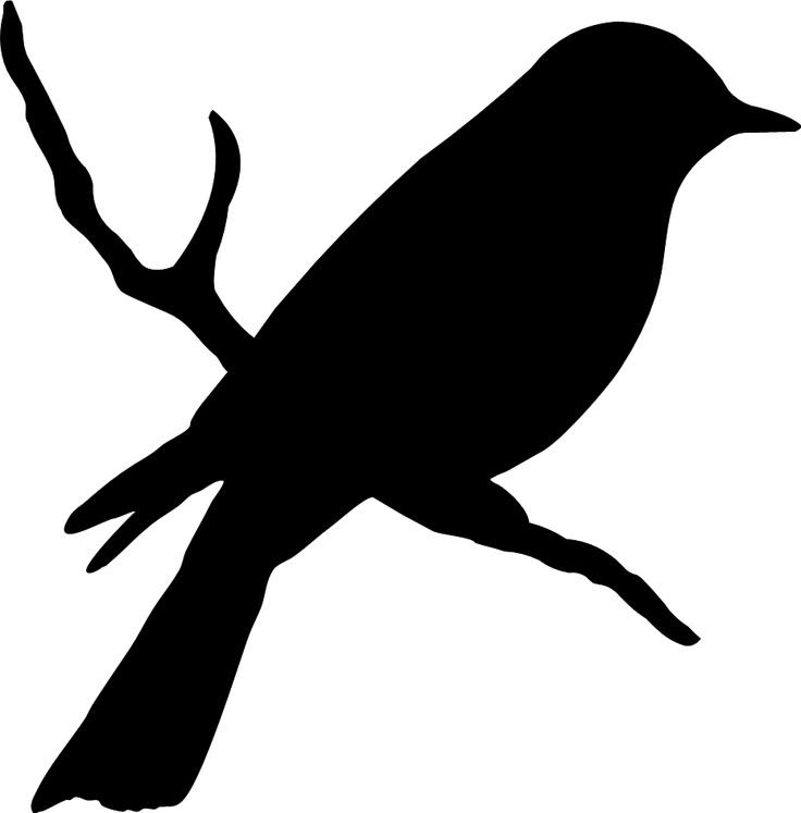 Mockingbird Clipart Clipart-Mockingbird clipart clipart-5
