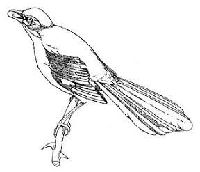 Mockingbird-Mockingbird-10