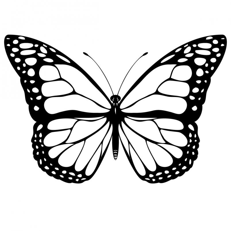 Monarch butterfly clipart black and white clipartall