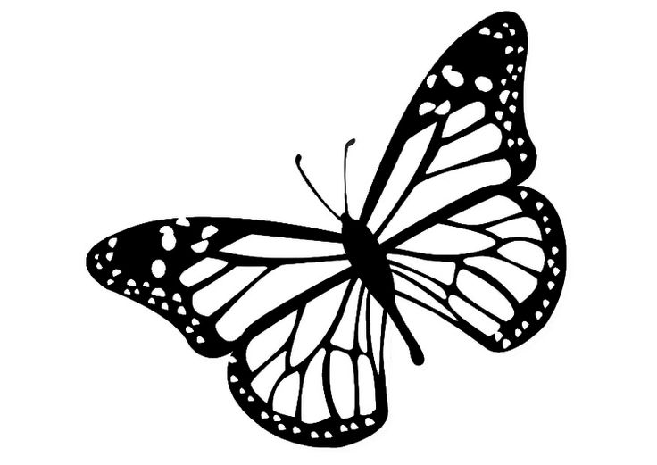 Monarch butterfly clipart monarch butterflies image