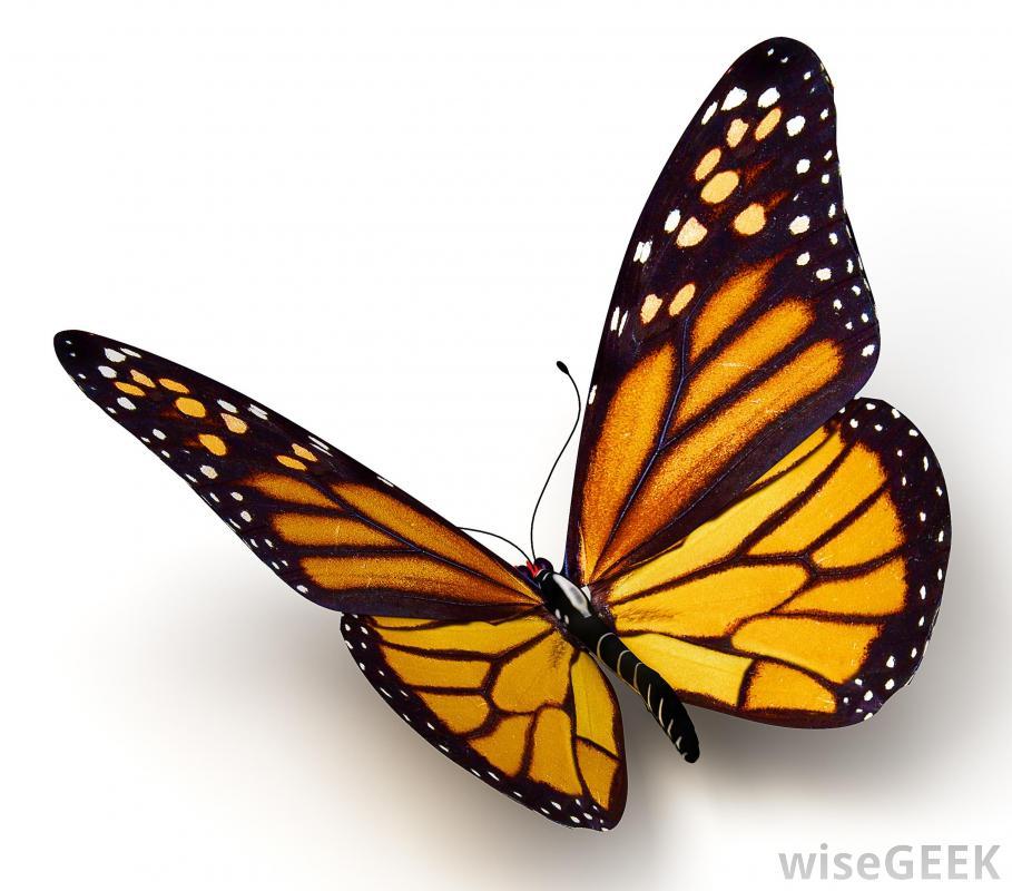 Monarch Butterfly Clipart-Monarch Butterfly Clipart-14