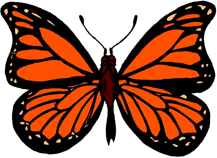 Monarch butterfly images .