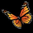 Monarch Butterfly-Monarch Butterfly-17
