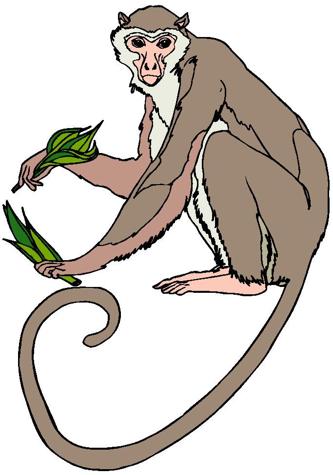 monkey clipart-monkey clipart-7