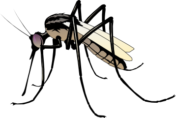 Mosquito Bold Http Www Wpclipart Com Animals Bugs M Mosquito