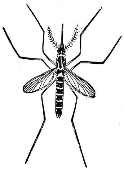 Mosquito clip art images free clipart 5 - FamClipart