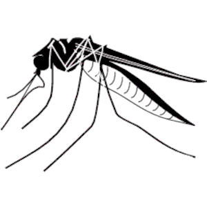 Mosquito Clipart Cliparts Of Mosquito Fr-Mosquito Clipart Cliparts Of Mosquito Free Download Wmf Eps-12